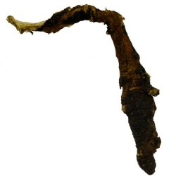 Osha Root (Ligusticum porteri) Whole 1 Lb